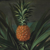 Power, Promise, Politics: The Pineapple – Session 1: Peter Crane