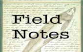 Field Notes [2012-2014]